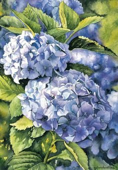 """Aquarelle Hortensias"": Gerard Bastien, Watercolor."