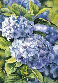 """""""Aquarelle Hortensias"""": Gerard Bastien, Watercolor."""