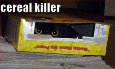 Fun Claw - Funny Cats, Funny Dogs, Funny Animals: Funny Cat Pictures With Captions - 20 Pics