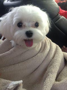 Dogs - happy enough