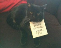 Cat-Shaming At Its Best - BuzzFeed Mobile