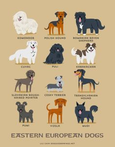 Eastern European Dogs--Adorable Drawings of Dog Breeds, Grouped By Their Place of Origin