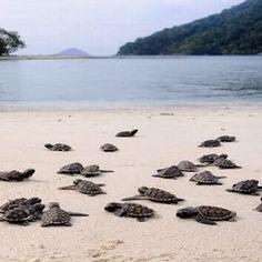 #anambas #island