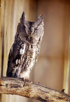 The Owl in the Barn (by Jacques-Andre Dupont).