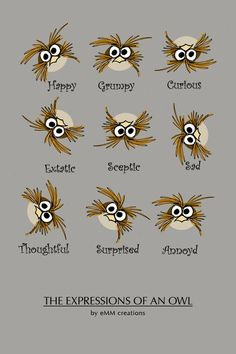 the expressions of an owl