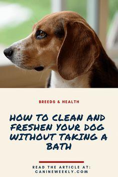 dog hacks,dog tips,dog learning,dog care,dog stuff Dog Barking At Night, Stop Dog Barking, Police Dog Training, Training Your Dog, Training Tips, How To Get Energy, Bad Body Odor, Dog Cleaning, Cleaning Products