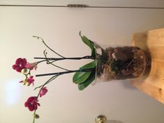"""A thank you gift to a very special teacher. Moss from dollar store, large rocks from backyard. Orchid, vase and small stones from Ikea. Contains """"lost treasure"""" key."""