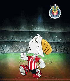 The perfect Chivas Campeon Gol Animated GIF for your conversation. Chivas Wallpaper, Chivas Soccer, Soccer Logo, Soccer World, Spongebob, Animated Gif, Art Reference, Snoopy, Animation