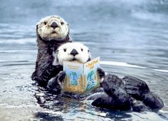 "A pair of otters read ""The Pout-Pout Fish"" while one of them balances the book on its tummy."