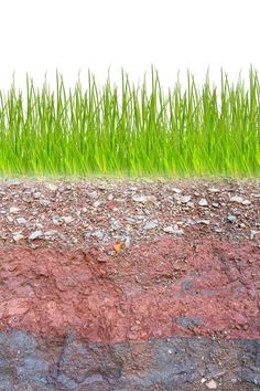 ... Cross section of green grass and underground soil layers beneath ...