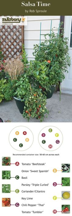 Grow everything you need for #Salsa on your patio! Salsa Time from the book Edible Container Gardening for Canada by Rob Sproule, Salisbury Greenhouse