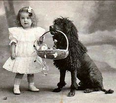 antique poodle photo with basket and little girl