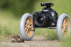 Photographie animalière | Gilles Martin