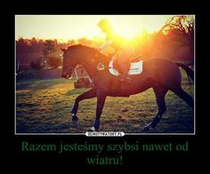 Rider Quotes, Leg Training, Horse Wallpaper, Happy Photos, I Want To Cry, Horseback Riding, Beautiful Horses, Equestrian, No Response