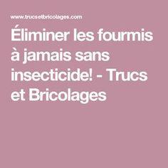 Éliminer les fourmis à jamais sans insecticide! - Trucs et Bricolages
