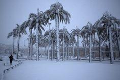 A man walks near palm trees as snow falls in Jerusalem's old city. (AFP)