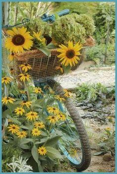 Bike Basket full of Sunflowers