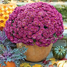 """Carve Out a Mumkin 