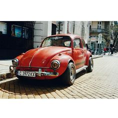 red beetle in sofia