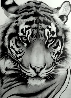 Here is another of my most recent Tigers. I finished it a while ago but havent had chance to upload it until now. It was drawn on smooth textured cartridge paper with a combination of 8B, 6B and HB...