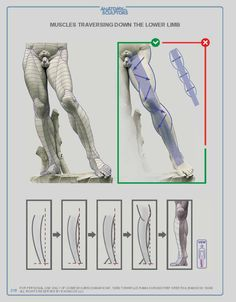 Anatomy For Sculptors: Understanding the Human Figure - Paperback Arm Anatomy, Anatomy Poses, Muscle Anatomy, Body Anatomy, Anatomy Study, Anatomy Art, Anatomy Organs, Human Figure Drawing, Figure Drawing Reference