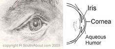 How Do You Draw Realistic Eyes?: The Anatomy of the Eye