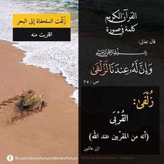 Pin By Essam Sayed Mohamed On كلمة فى صورة In 2021 Islam Quran Instagram Quran