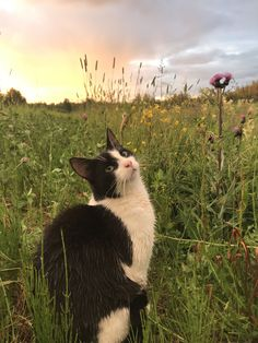 Uploaded by Find images and videos about aesthetic, nature and flowers on We Heart It - the app to get lost in what you love. Animals And Pets, Baby Animals, Cute Animals, Cute Creatures, Beautiful Creatures, Crazy Cat Lady, Crazy Cats, I Love Cats, Cute Cats