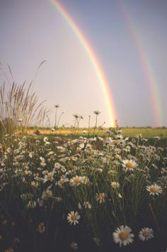 Double rainbow in the daisy field Rainbow Aesthetic, Blue Aesthetic, Daisy Field, Daisy Love, Rainbow Wallpaper, Colorful Wallpaper, All Nature, Over The Rainbow, Aesthetic Wallpapers