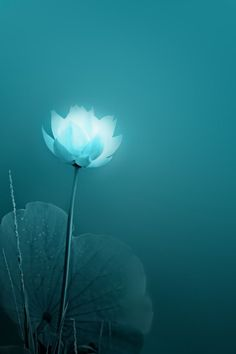 Turquoise flower.