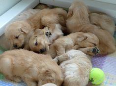 Sleepy babies!