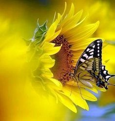 Butterflies Flying, Beautiful Butterflies, Beautiful Flowers, Ikebana Flower Arrangement, Flower Arrangements, Sunflowers And Daisies, Heart Gif, Gifs, More Images