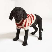 puppies in sweaters - Google Search
