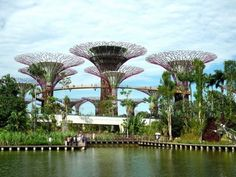 """Super trees of Singapore. Solar powered """"super trees"""" provide energy, shade, and a habitat to various plants within this nature park."""