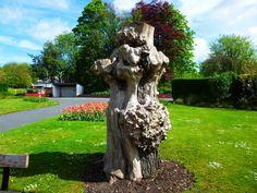 Landmark by Zrnho Correy an old tree in Stamford Park Stalybridge UK