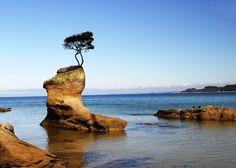 """""""A sabedoria da natureza é tal que não produz nada de supérfluo ou inútil.""""  Nicolau Copérnico"""