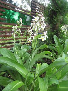Gallery - Octopus Garden Design  New Zealand Rock Lily