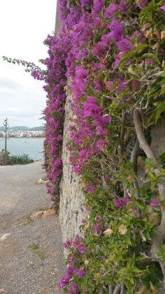 Flowerwall Ibiza wall Figurettas inspiration