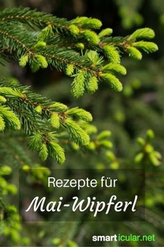 Tannenwipfel recipes – healing power of the forest – Rezepte für Tannenwipfel – Heilkraft des Waldes Every spring firs and spruces drift new branches. These contain many healthy ingredients that you can use in the kitchen. Tree Tops, Healing Herbs, Medicinal Plants, Herbal Medicine, Superfood, Good To Know, Natural Health, Health And Beauty, Healthy Life