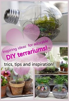 Inspiring Ideas For Adorable DIY Terrariums | Just Imagine – Daily Dose of Creativity