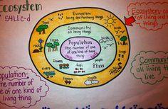 Ecosystem anchor chart