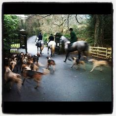The Bray Hunt at a meet near my house