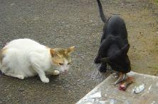 Friends in Mattencherri