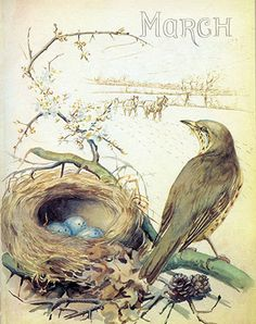 Song Thrush and nest, March (1906) - from Edith Holden's Phenology of the English Midlands by Month, 1905-1906.