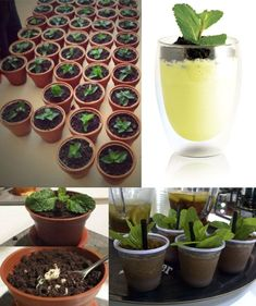 Plants drinks concepts are spreading in Asia and are a perfect way to attract your customers' attention and offer drinks mixing colours, textures and tastes. Plant drinks | monin.com