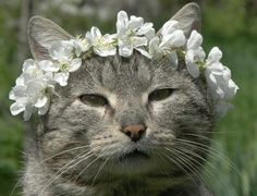 Flower girl cat