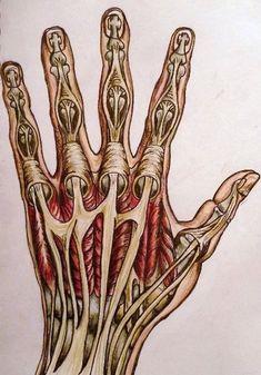 la mano sinistra