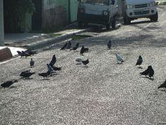 unas aves que vi en la mañana antes de irnos para la playa