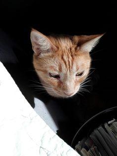 Il mio micione Bri! Giochi di luce... #mycat #cat #cats #gatti