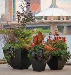 planters, notice the red/orange stick in the larges planter to repeat the color in all three. Lush Garden, Garden Planters, Dream Garden, Outdoor Landscaping, Outdoor Gardens, Mini Gardens, Sustainable Farming, Rooftop Garden, My Escape